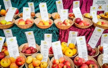 Apfelsorten_Grüne-Woche-Berlin_Vieregge-MdB