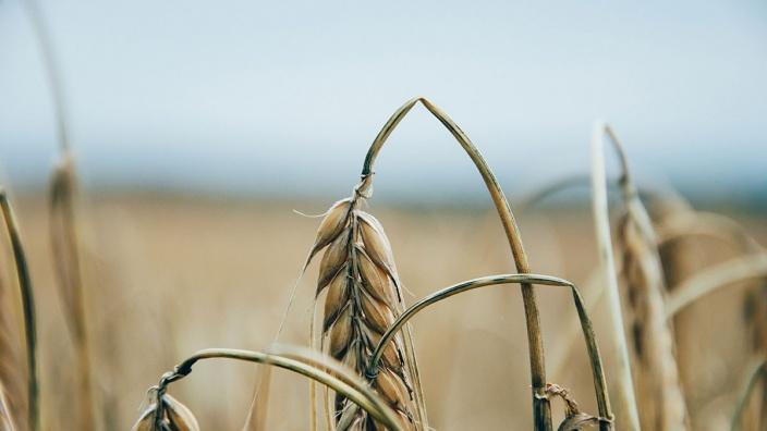 Der anhaltende Hochsommer und fehlender Regen machen den Landwirten bundesweit zu schaffen