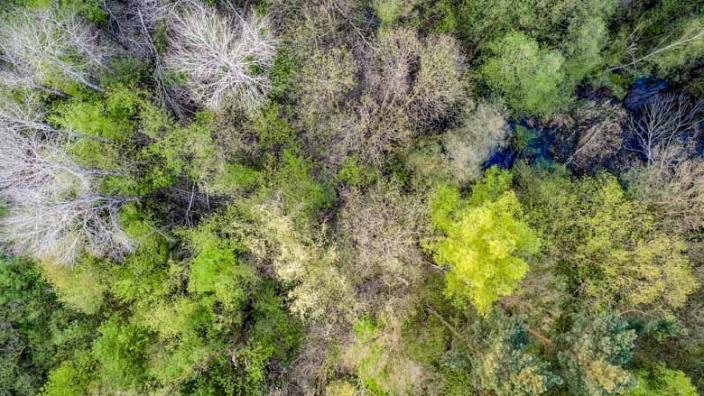 Unser Wald